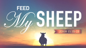Feed My Sheep featured image